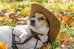 hond in een hoed en op herfstbladeren foto