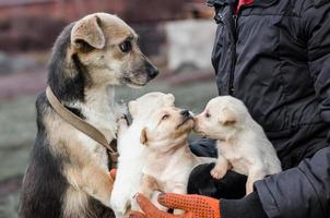 volwassen hond en puppy's in de handen van een man foto