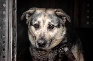 trieste hond op een donkere achtergrond foto