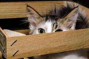 kat in een houten kist