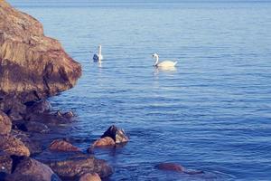 zwanen en rotsen met water foto