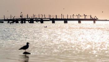 dok en vogels en zonsondergang foto