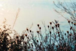 planten bij zonsondergang foto