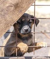 bruine en zwarte pup achter een hek
