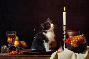 zwart-wit kitten in stilleven omgeving