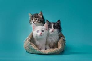drie kittens in een zak foto
