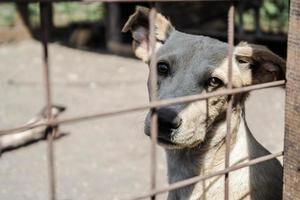 witte hond achter een hek buiten foto