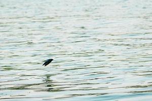 motie wazig vogeltje vliegt over het oppervlak van de rivier foto