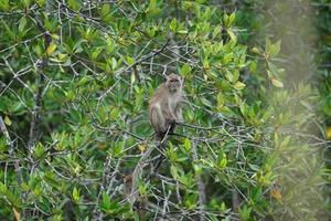 selectieve focus op aap zit op de takken van mangrovebomen met wazige jungle op achtergrond foto