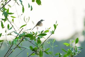 motie wazig vogeltje vliegen van de takken van de boom met heldere hemelachtergrond foto