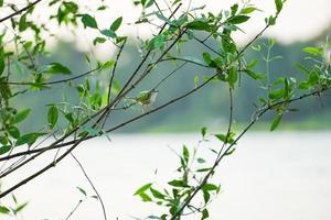 vogeltje vasthouden aan de tak van de boom met heldere hemelachtergrond foto