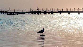 silhouet van een vogel op het water foto