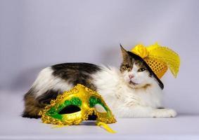 kat in een hoed met een masker