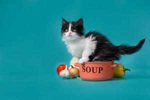 kitten in een kom soep