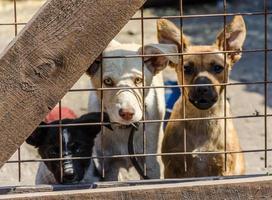 drie puppy's achter een hek