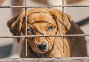 bruine pup achter een hek