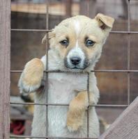 puppy steekt hoofd uit hek