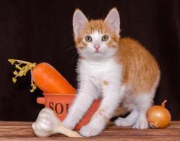 kat met verse ingrediënten voor soep