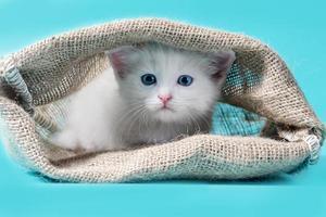 witte kitten in een zak