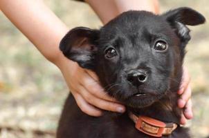 zwarte pup met de handen van kinderen op de nek