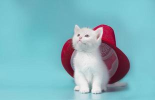 rode hoed op een kat