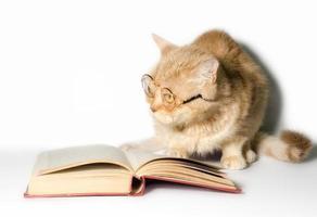 leesbril op een kat met een boek