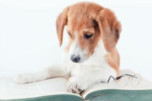 hond die een boek bekijkt