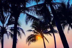 silhouet van palmbomen