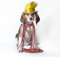 mardi gras puppy op witte achtergrond