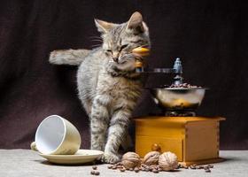tabby kitten en koffie