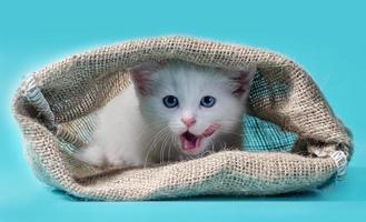 wit katje in een zak