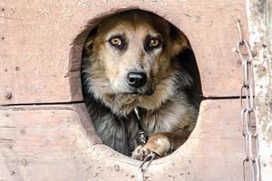 ongelukkige hond in een hondenhok