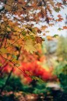 herfstbladeren op bomen foto
