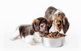 twee honden die voedsel eten