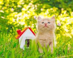 kitten met speelgoed huis
