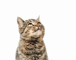 close-up van een bruine Cyperse kat foto
