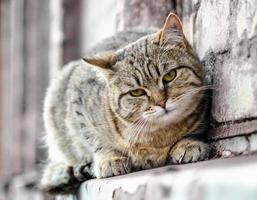 close-up van een kat op een muur foto