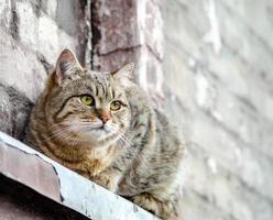 kat zittend op een vensterbank foto
