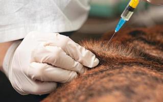 dierenarts geeft een injectie aan een zieke hond
