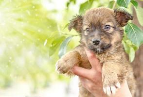 bruine pup in handen
