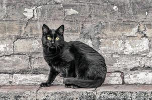 zwarte kat, zittend op de muur foto