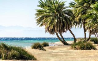 palmbomen aan zee foto