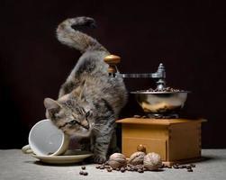 kitten met koffiemolen