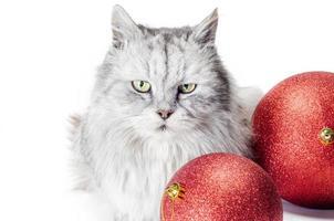 grijze boze kat met rode kerstballen foto