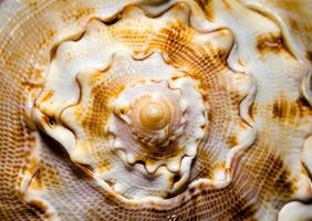 close-up van een zeeschelp foto
