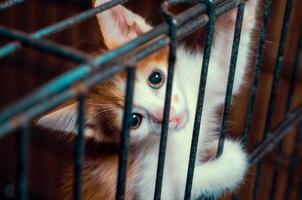 kitten in een kooi