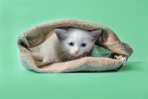 witte kitten in een zak op een groene achtergrond