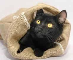 zwarte kat in een tas