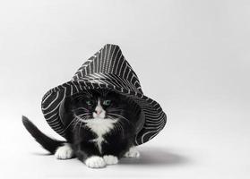 zwart-wit kitten onder een gestreepte hoed