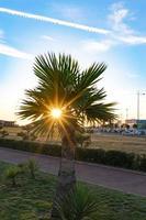 de zon schijnt door palmbladeren tegen een stedelijk landschap in Sotsji, Rusland foto